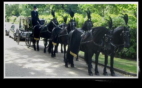 Six Horse Team